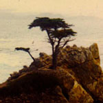 1987; North CA; Tree Japan. Ten days, car.